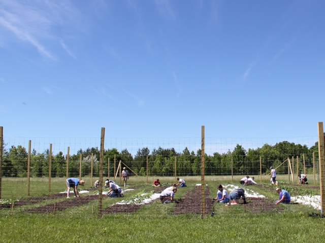 people bending near the ground, working with soil and plants behind a fence on a clear day