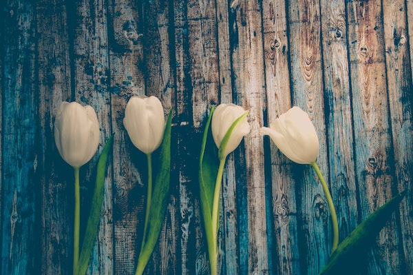 4 white cut tulips lying on a table