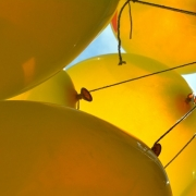 a bunch of inflated yellow balloons with strings attached