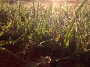 photo credit: Drops of Light via photopin (license)